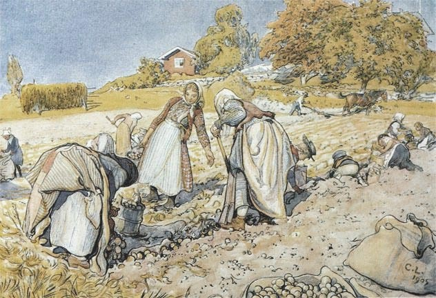 The Potato Harvest, Carl Larsson 1905