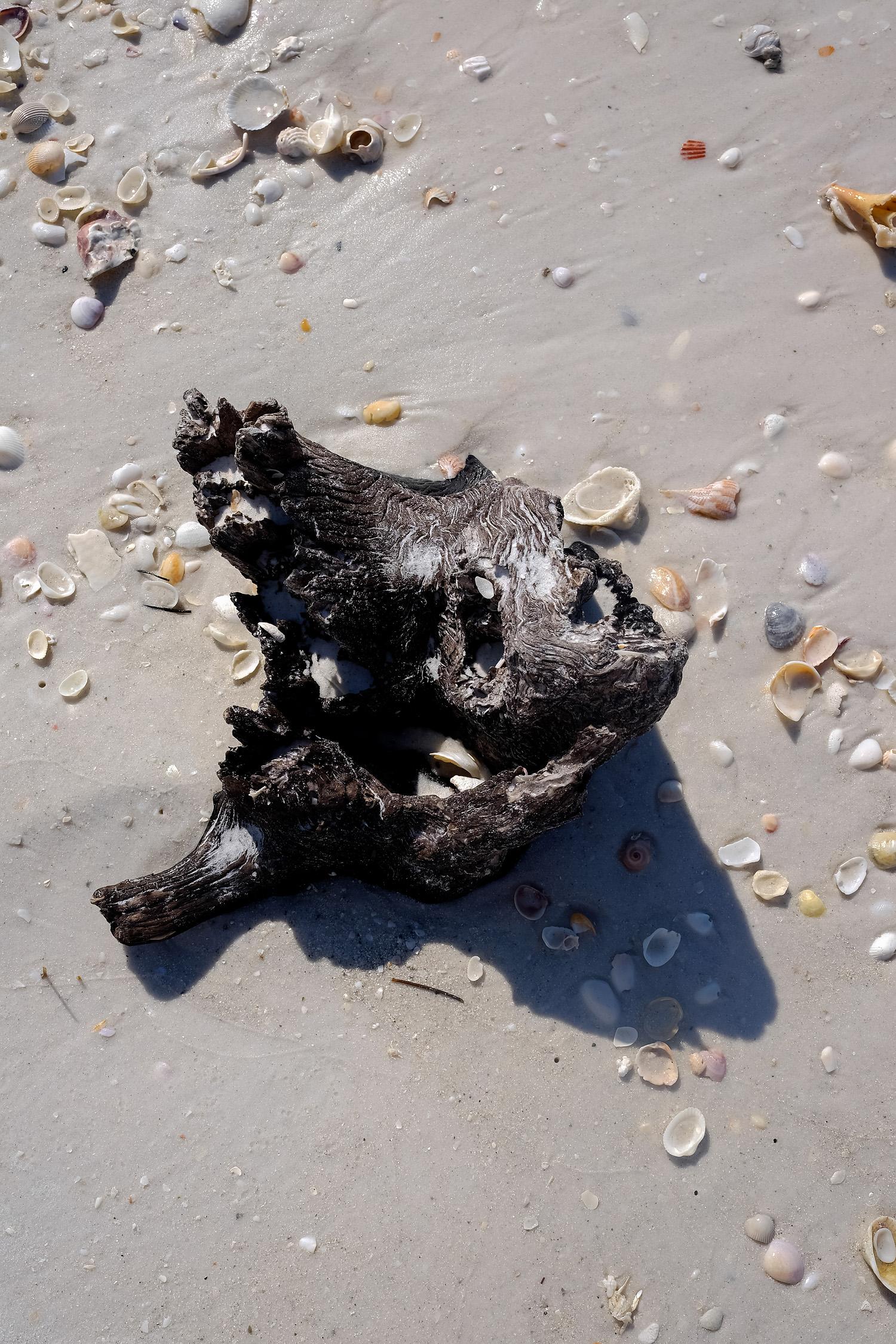 Sarasota beach, the wooden head