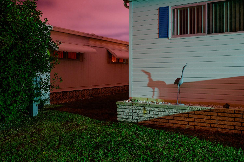 Ibis under the pink sky (I),Sarasota
