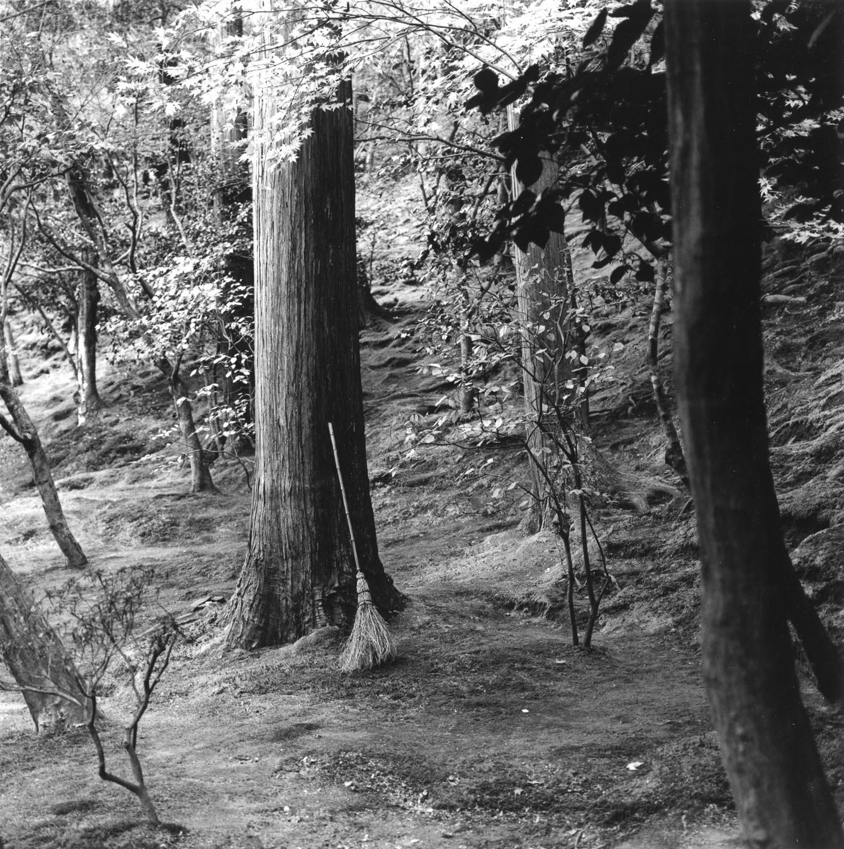 Forest Broom, Ginkaku-ji