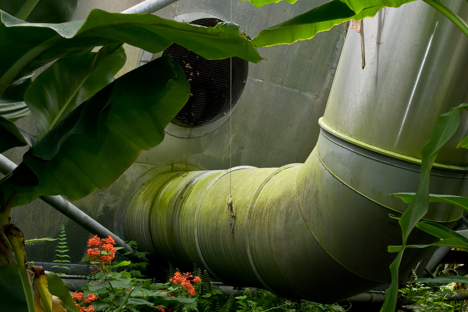 Green Ductwork, Eden Project from  Terraria Gigantica: the World Under Glass
