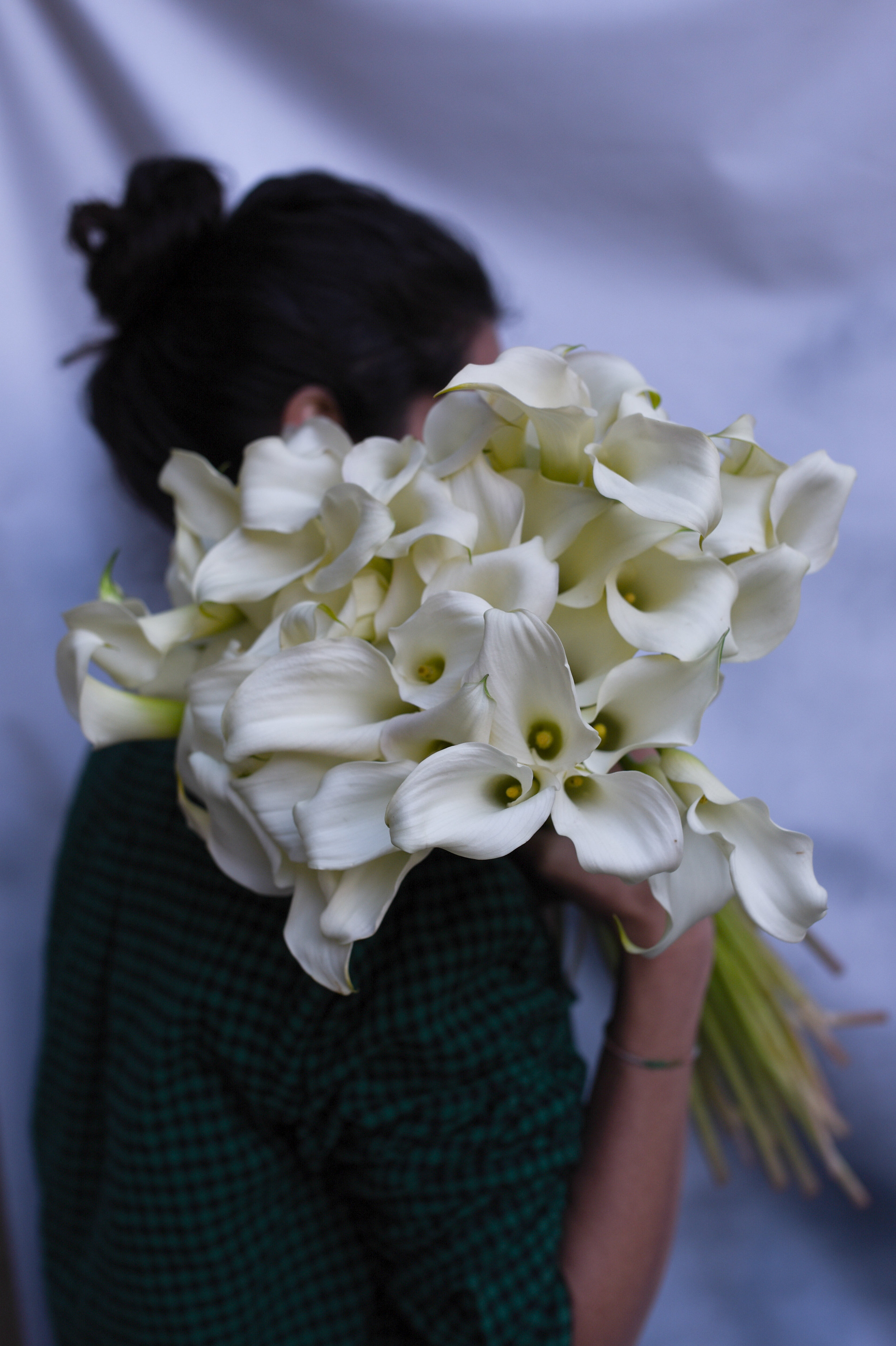 Simple and elegant calla lilies to be used for bridesmaid's bouquets