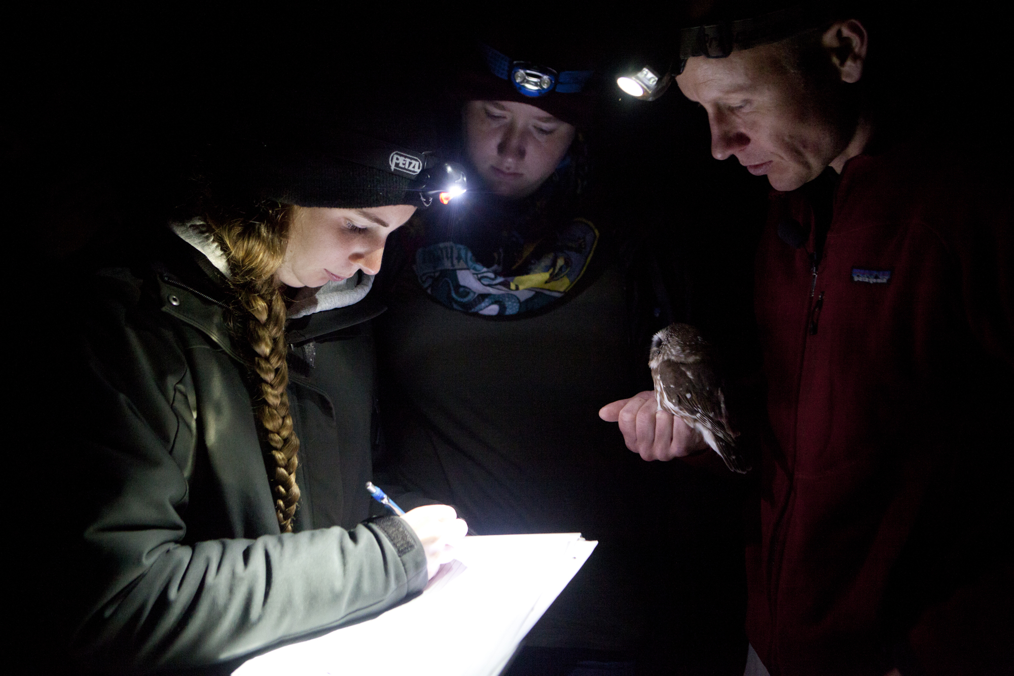 Biodiversity Research Institute's Patrick Keenan, left, works with interns to record data during Northern Saw-whet Owl banding operations at Suckfish Brook in Falmouth, Maine on October 14.
