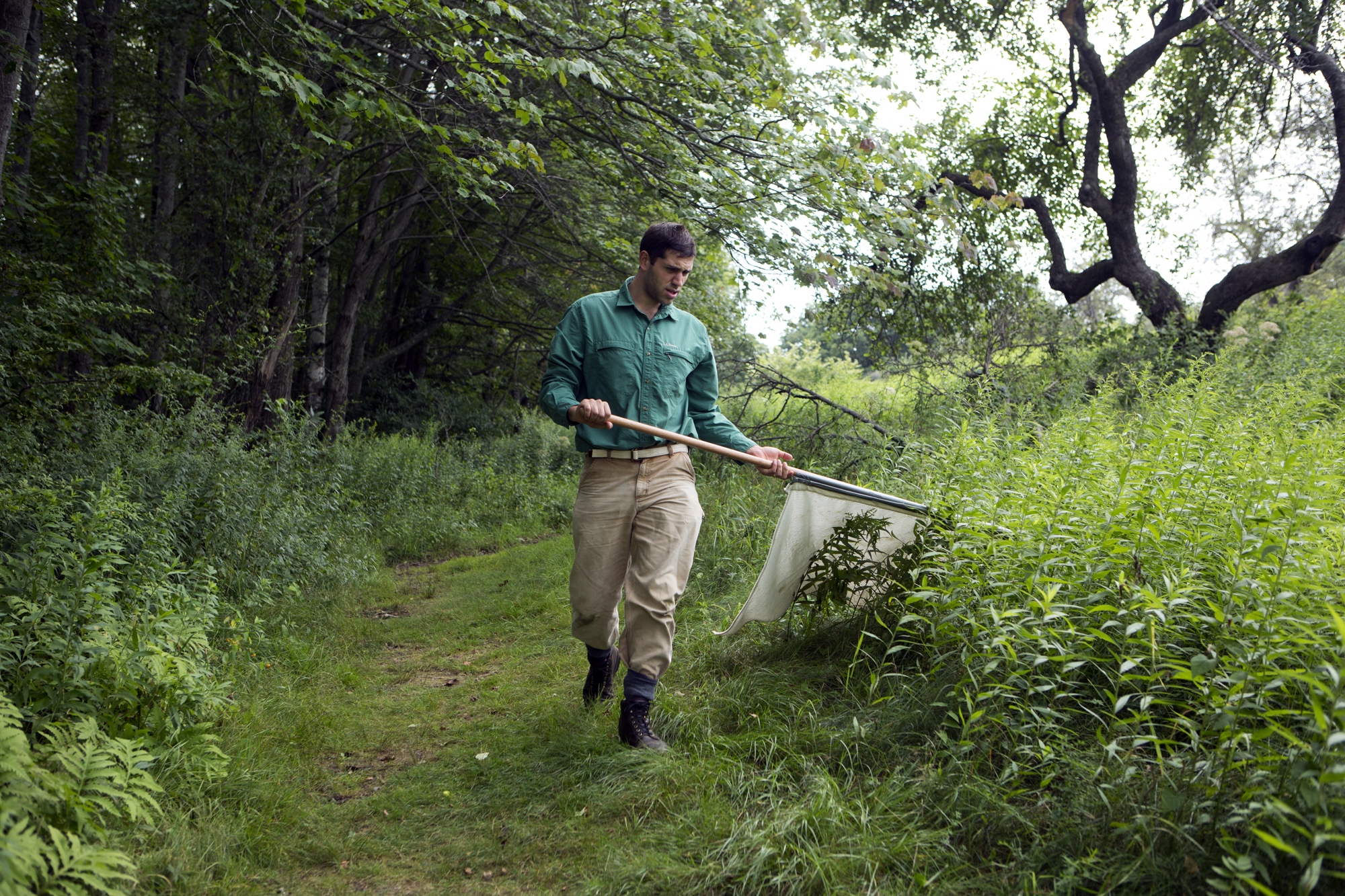 Ben Stone of the Vector-borne Disease Lab at Maine Medical Research Center Institute flags for ticks at Gilsland Farm Audubon Center in Falmouth, Maine on August 4.