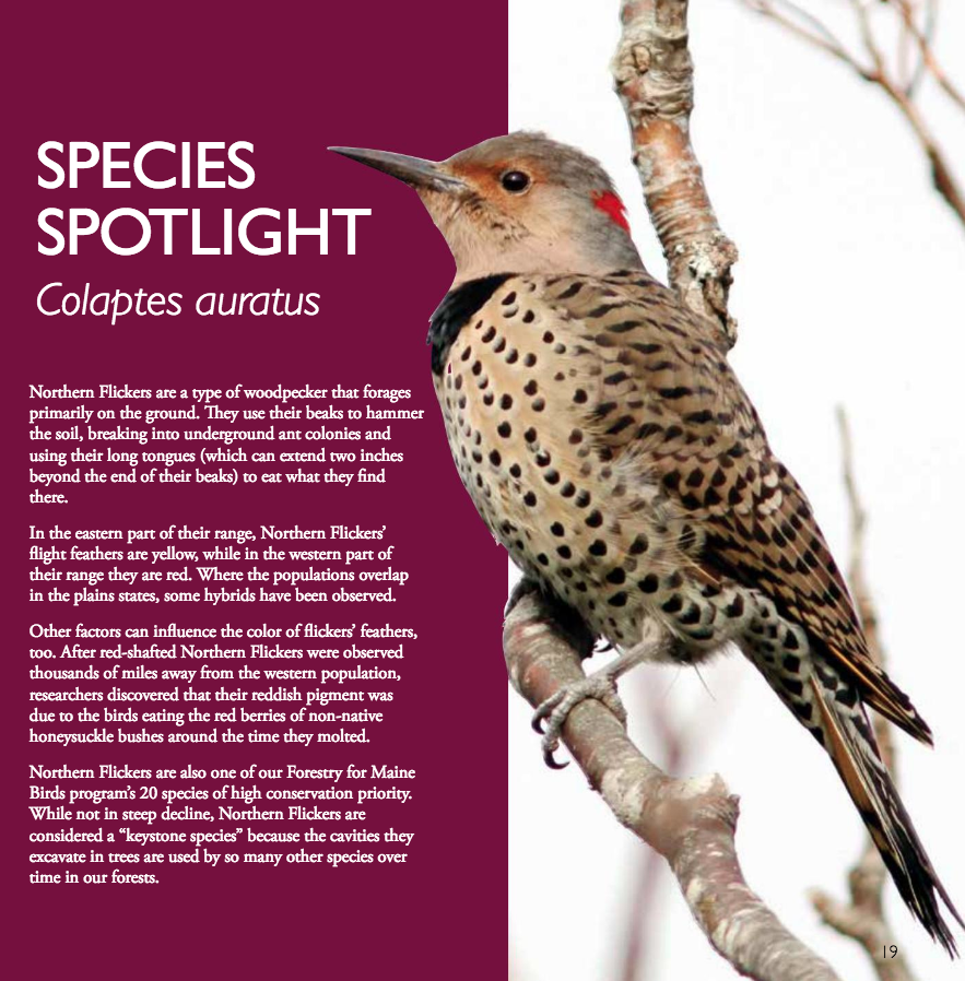 Species Spotlight