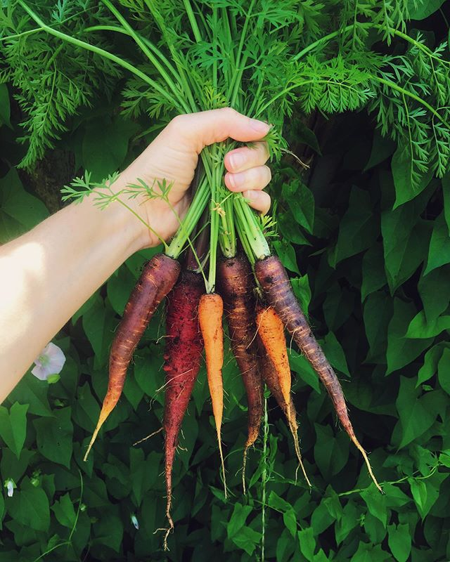 April showers bring July carrots 🥕