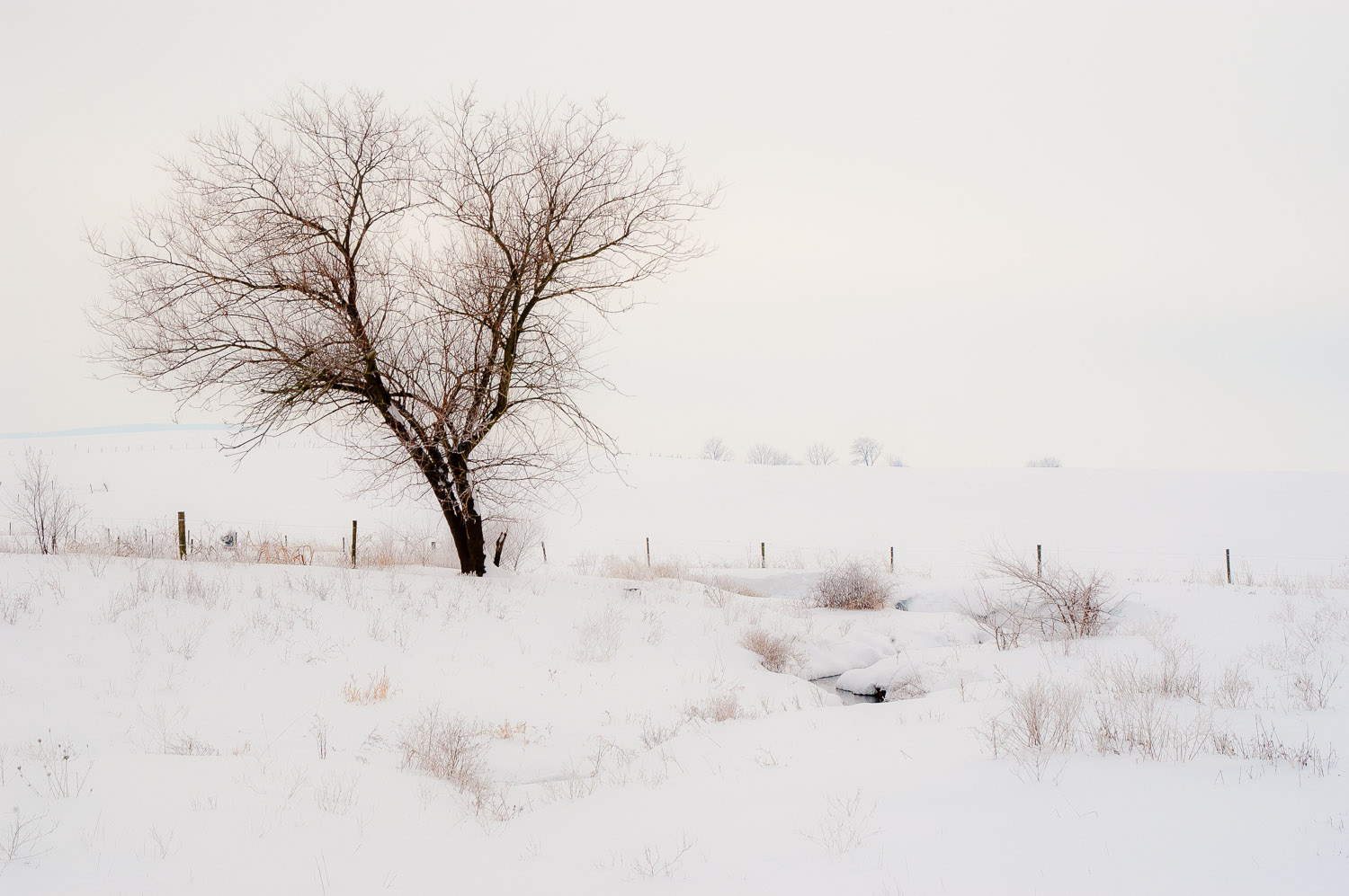 Winter Farm Field