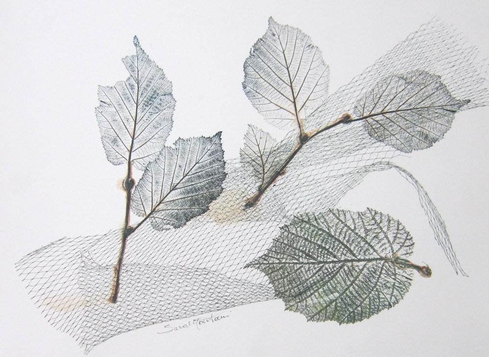 Foglia di nocciolo   2010, foglie e rete stampate a monoprint, carta Graphia, 30 x 40 cm