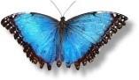 Judy butterfly.jpg