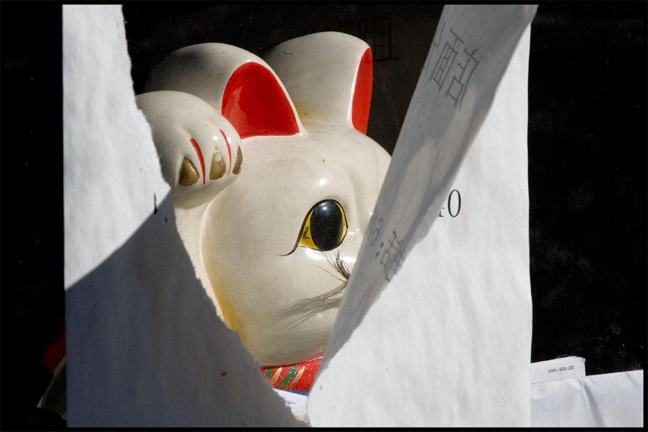 Papercat