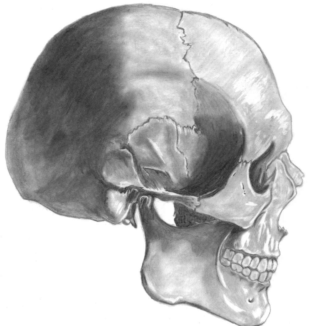 Anatomical Studies