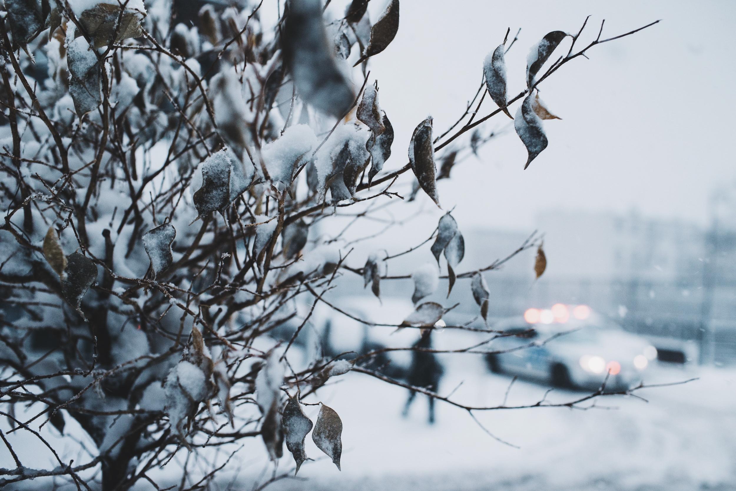 snow-104.jpg