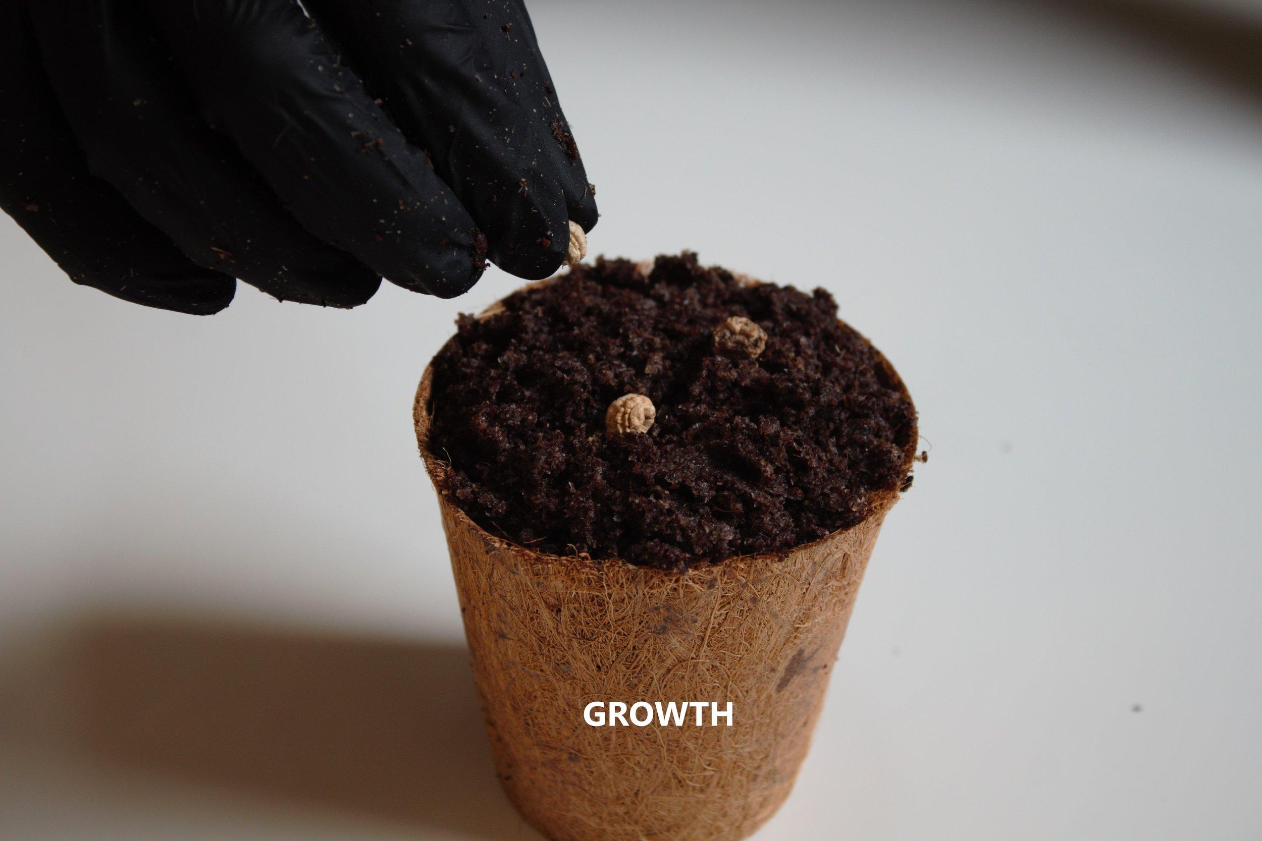GROWTH4.jpg