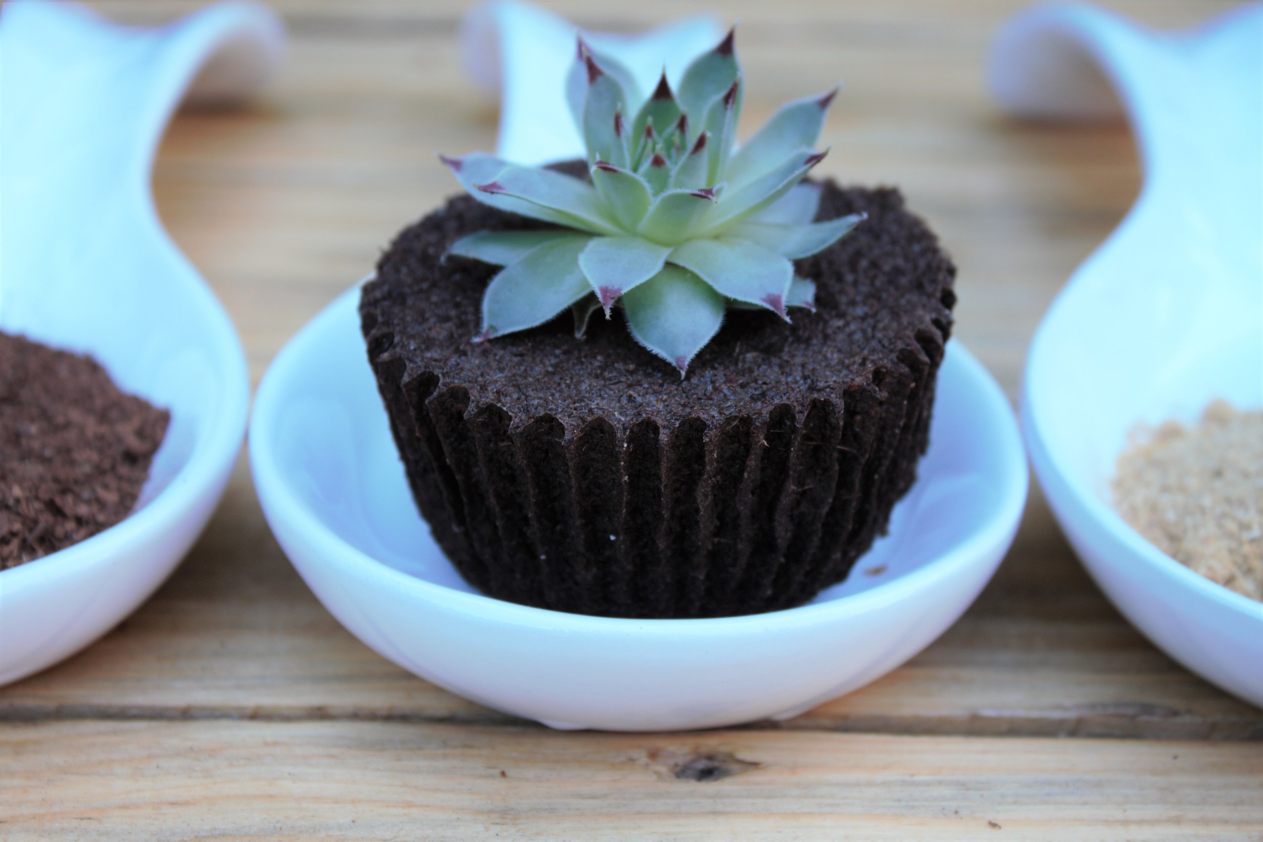 BotanicalCupcake Design - Sustainable Design 101