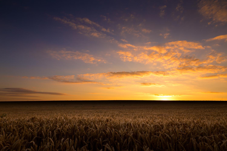 Bailly-Wheat-feilds-1.jpg