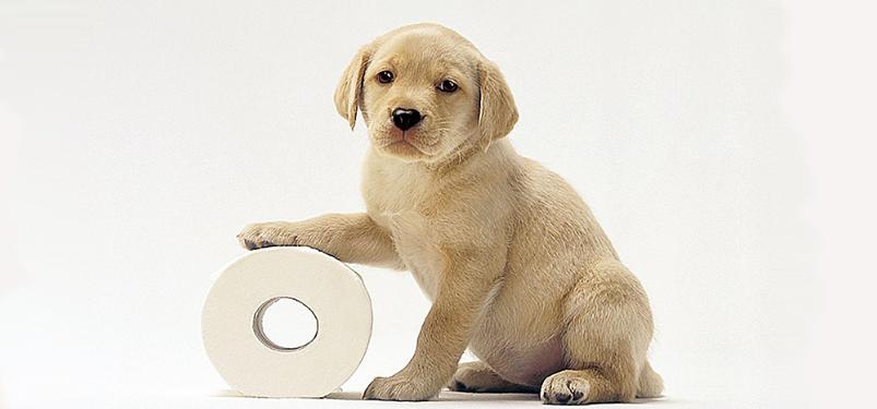 huấn luyện chó giữ nhà