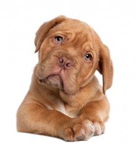 pup 2.png