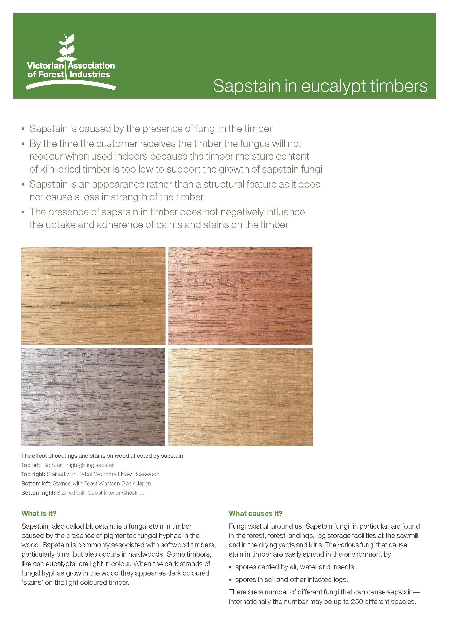 Sapstain_in_eucalypt_timbers_Part1.jpg