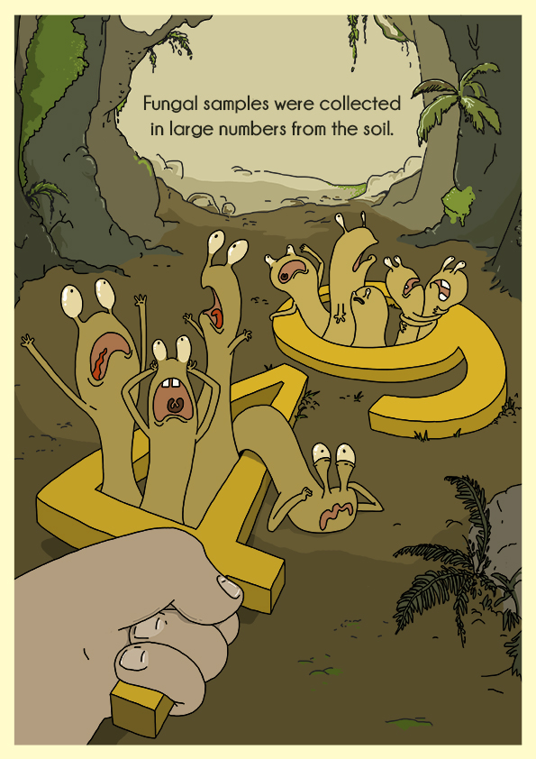 Cartoon image of fungi in large numbers with the text, 'Fungal samples were collected in large numbers from the soil'.