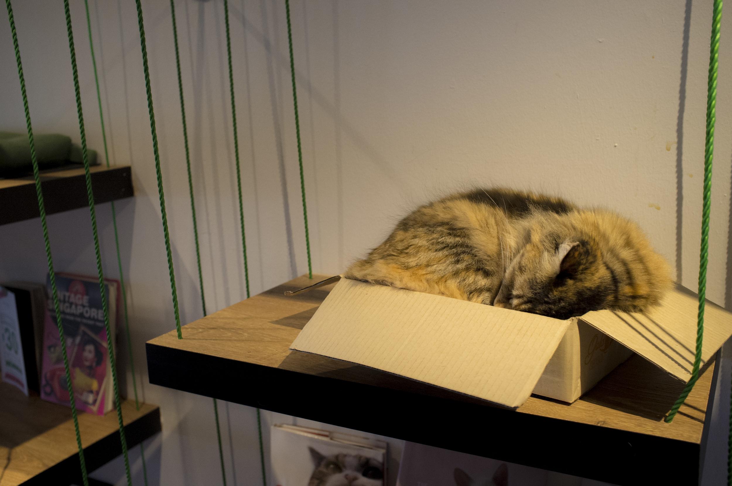 brown cat sleeping (edited).jpg