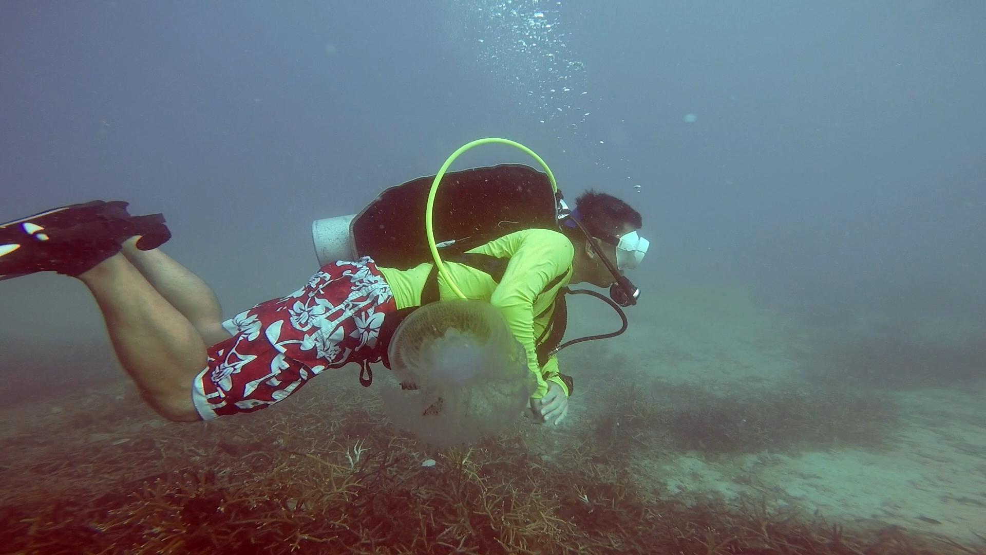 dive006_jellyfish.png