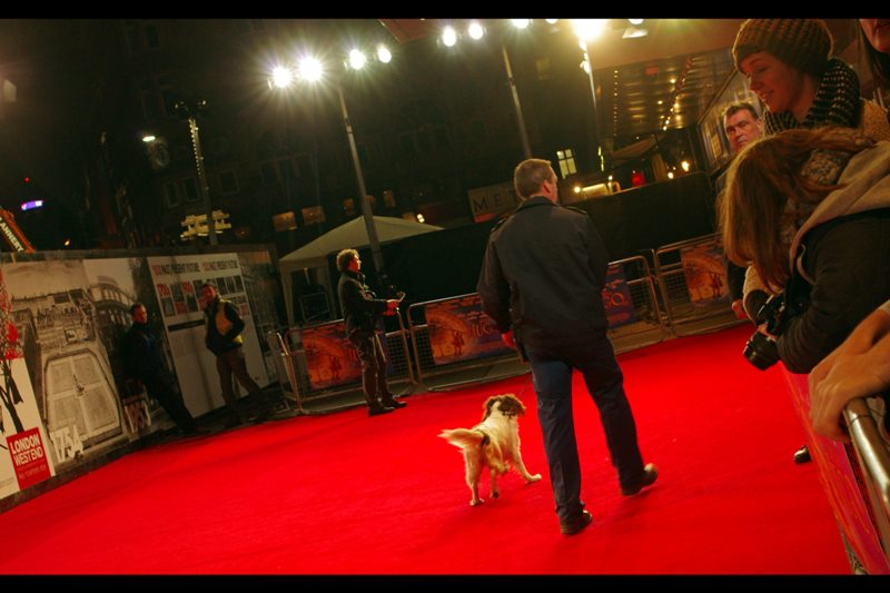 Sniffer dogs are unusual premieres, however this is a Royal Screening coupled with a Premiere, so precautions have to be taken. Oddly these precautions do not involve turfing out irritating and rowdy autograph dealers and people who haven't showered in the past 96 hours.