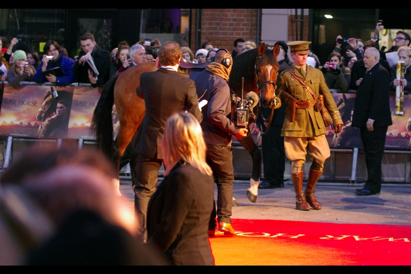 The horse (possibly called 'Joey') who plays 'Joey' (also a horse) in the film was specially brought to the premiere, and was very well behaved.