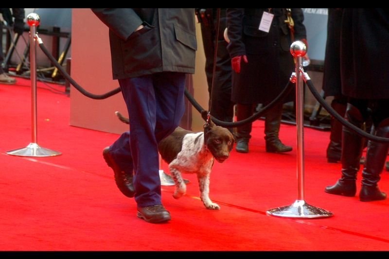 There was a security presence in the form of dogs and bag searches at the BAFTAS, since Royalty Would Be Attending, but in order to preserve a sense of mystery I shall not state my opinion on how successful they might have been at stopping a motivated crazy person. (I assume there were snipers in some of the high windows overlooking the area, though).