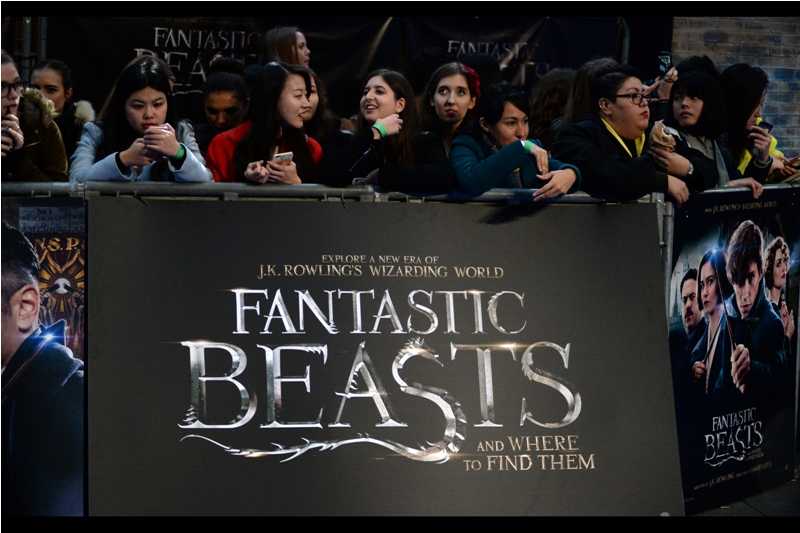 I'm pretty sure the fantastic beasts won't be that hard to find - your favourite local toy store, online retailer or merchandise point will no doubt be able to assist.