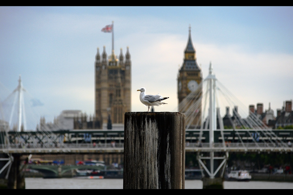 We start this premiere journal in a way a regrettably small number of journals do : a seagull perched on a log in front of Big Ben.