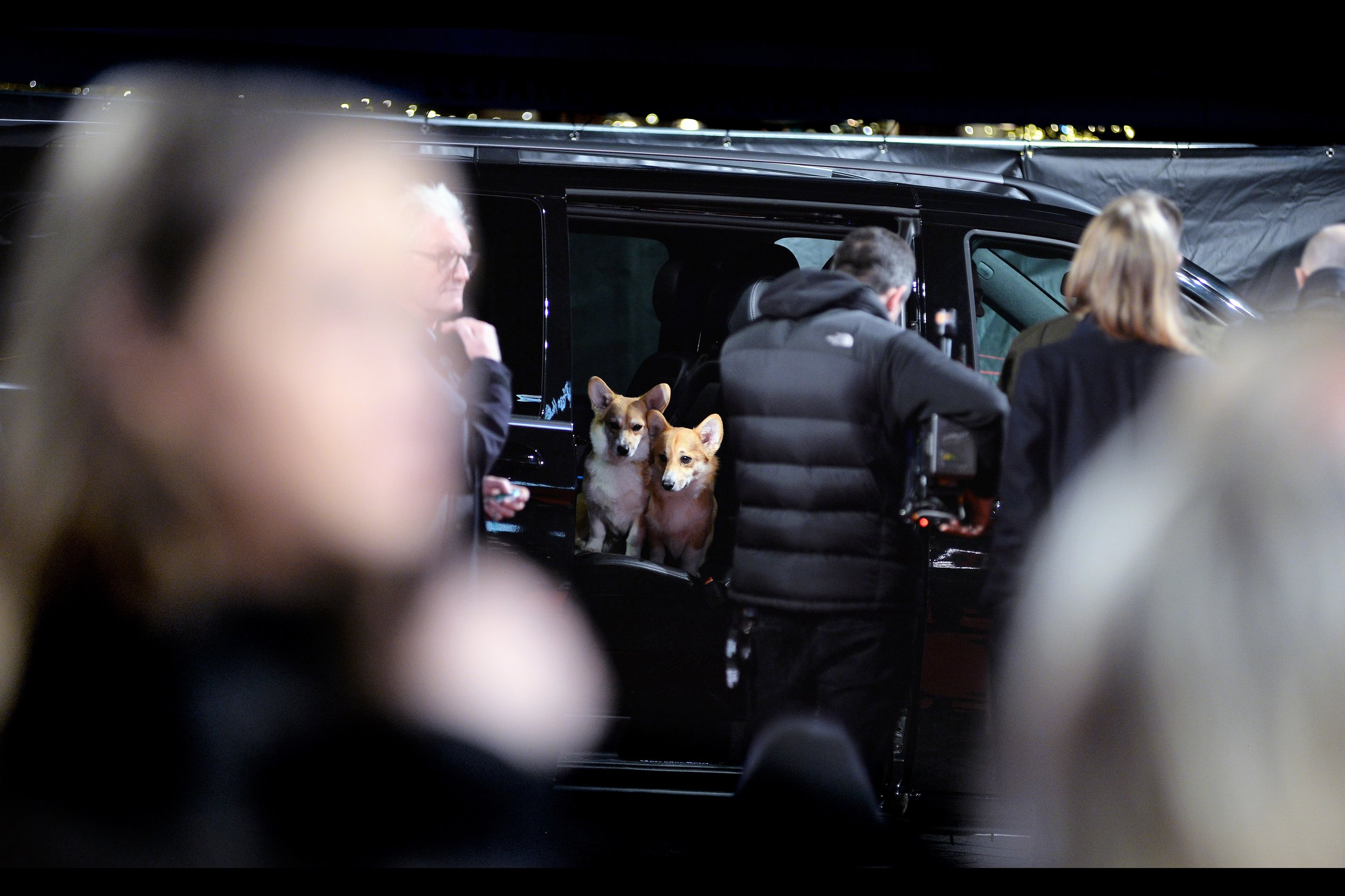 They brought Corgis to the premiere! I've heard they can be a grouchy, bitey breed. On a separate but related topic, our pen is filled with autograph dealers, and their coats are not nearly as shiny.