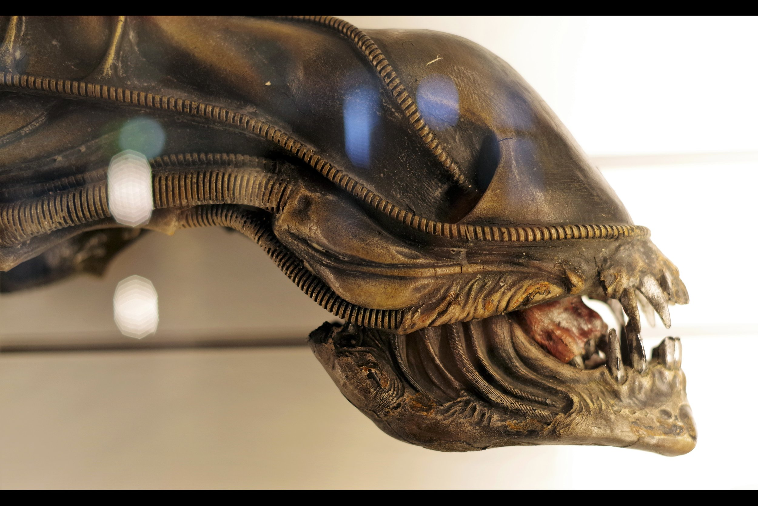 """""""Flossing. It's important, no matter what the species...""""  Xenomorph Head from ALIENS (1986). Starting bid: £10,000…. eventual sale price : UNSOLD."""