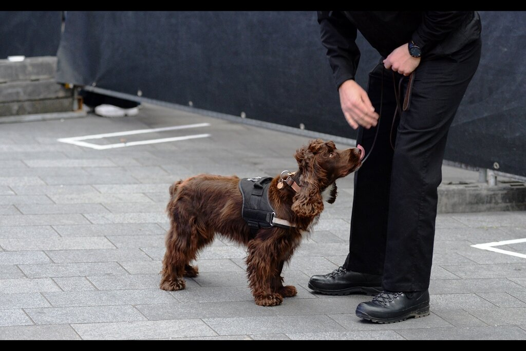 """""""You know those treats you give me everytime smell something that's suspicious? Well how do you know I'm not going to start planting suspicious things so you'll give me those treats??"""" """"You're such a cute doggie…"""" """"… and you can't understand a word I say, can you?"""""""