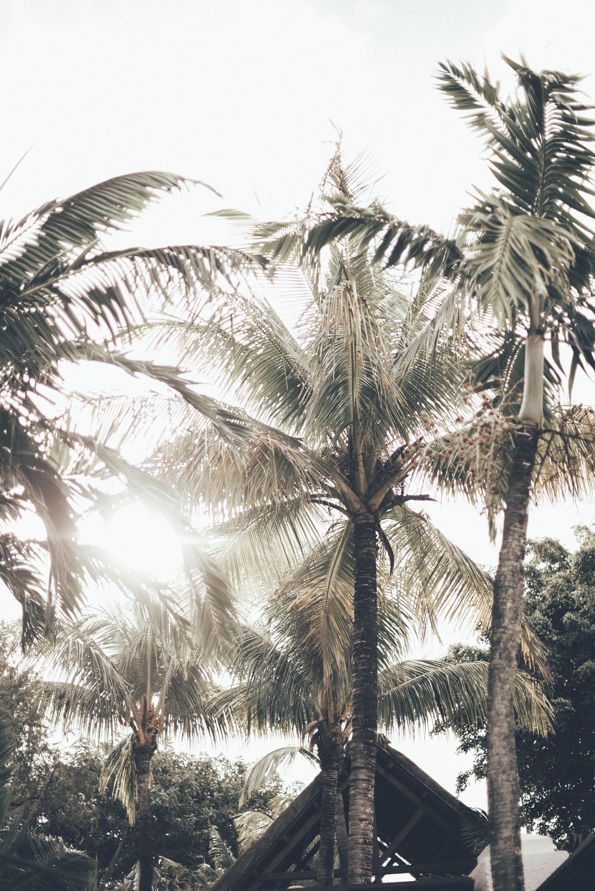 Mauritius 34.JPG