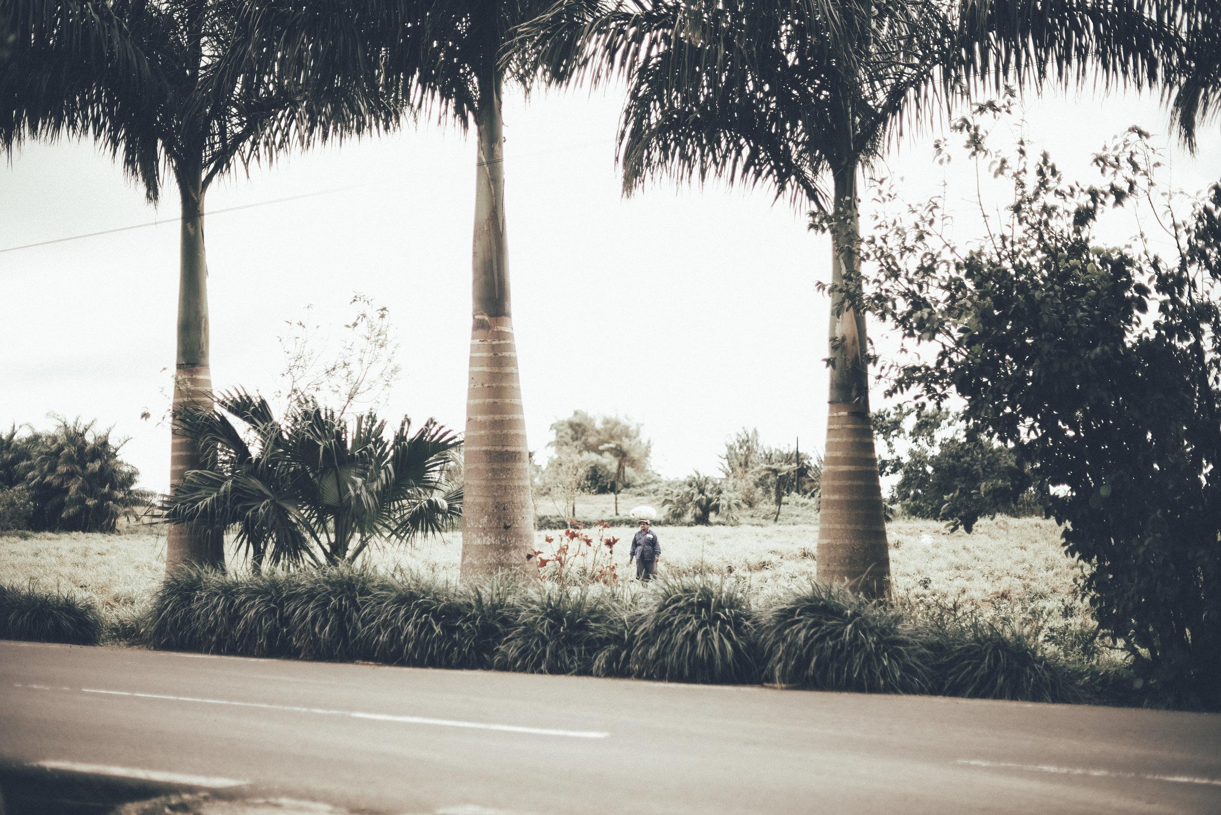 Mauritius 83.JPG