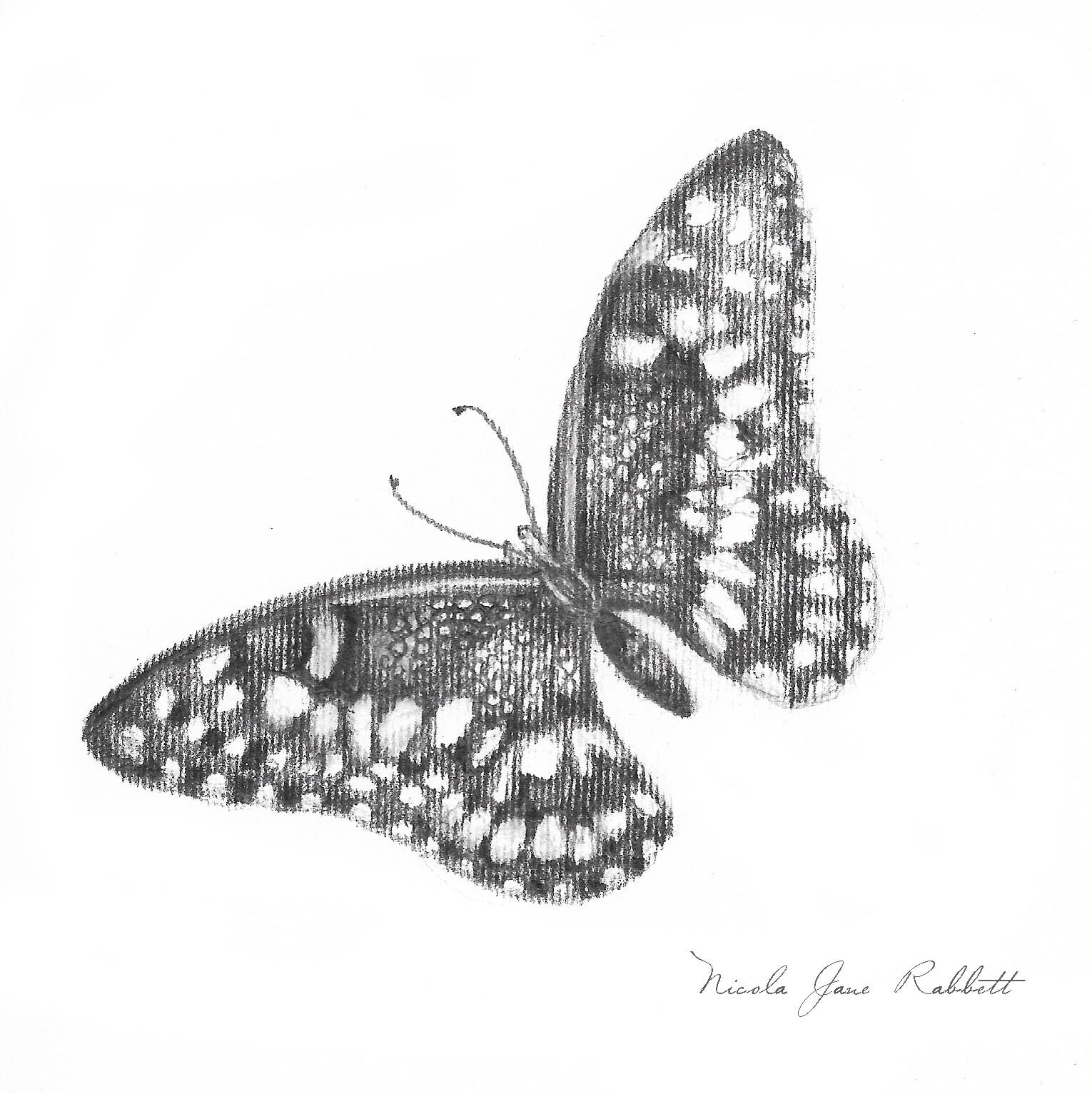 Beautiful Butterfly - The magical qualities of the butterfly. With it's uniquely patterned, featherlight wings, continues my journey with my #monochrome drawings.. It is a #work-in-progress at the moment as I need to add the fine details. This will be added to my collection of #original #drawings in the store, once finished and framed.