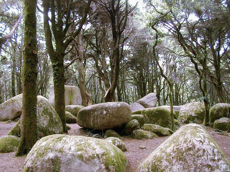 Sintra forests (5).jpg