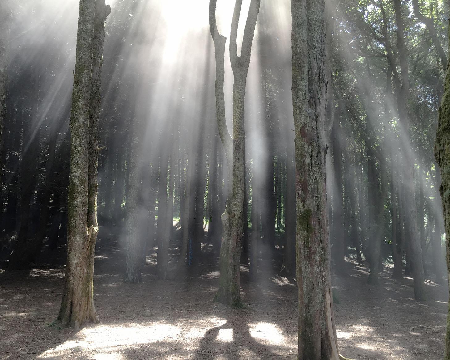 Sintra forests .jpg