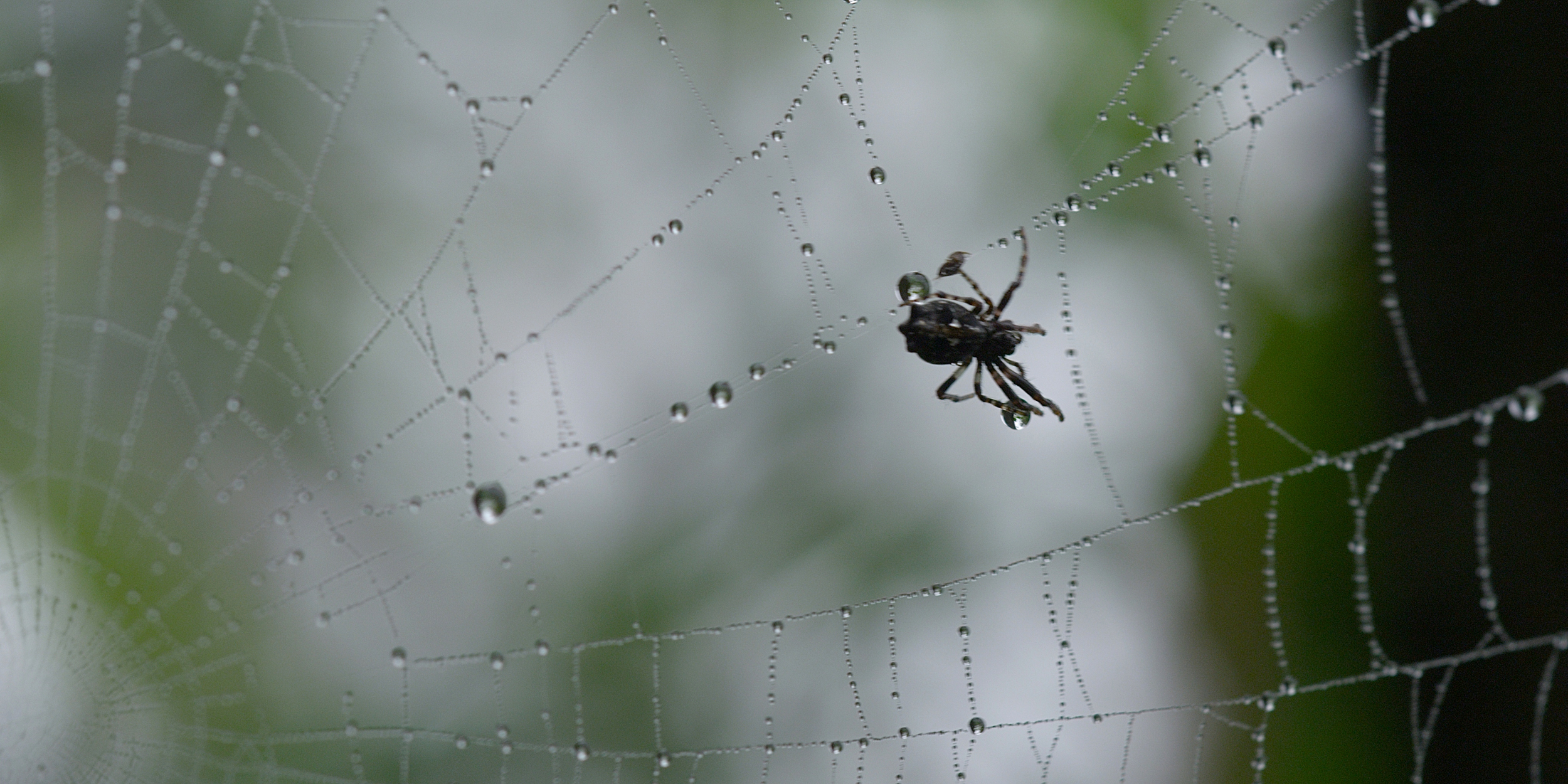 42 02312318_Spider.jpg
