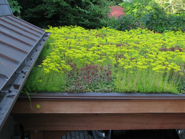 Wellsgreenroof3.jpg