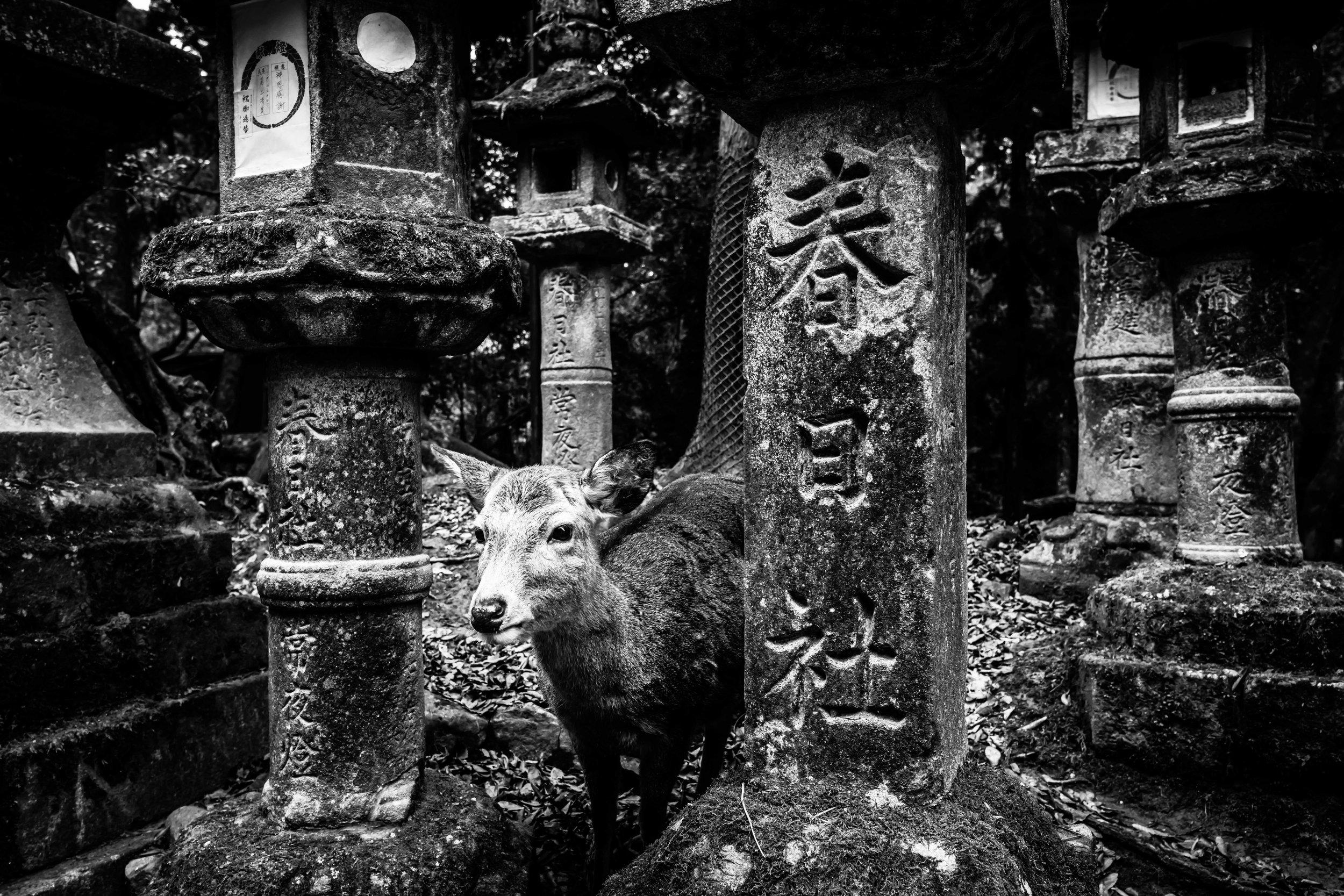 Nara 2017 #3