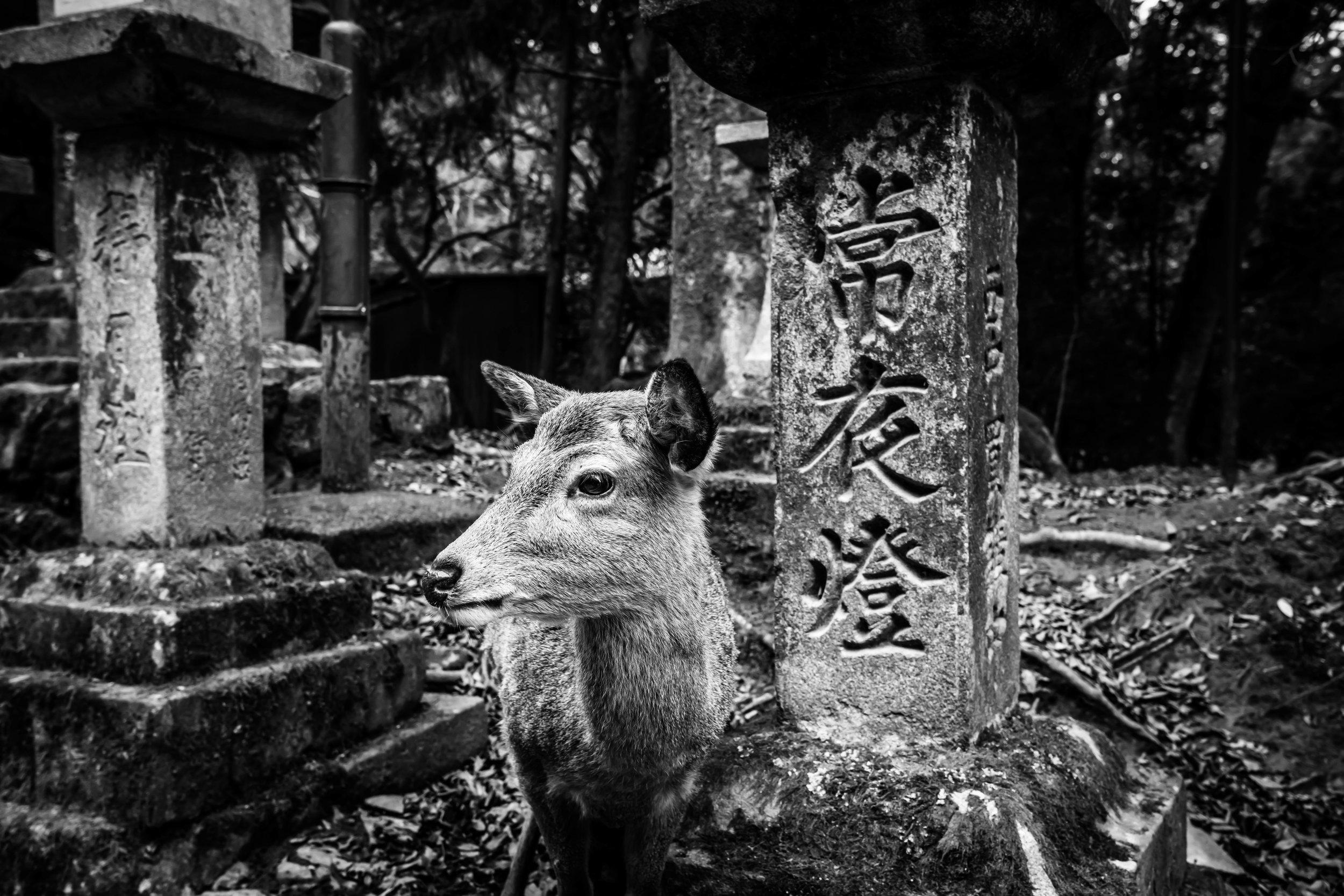 Nara 2017 #4