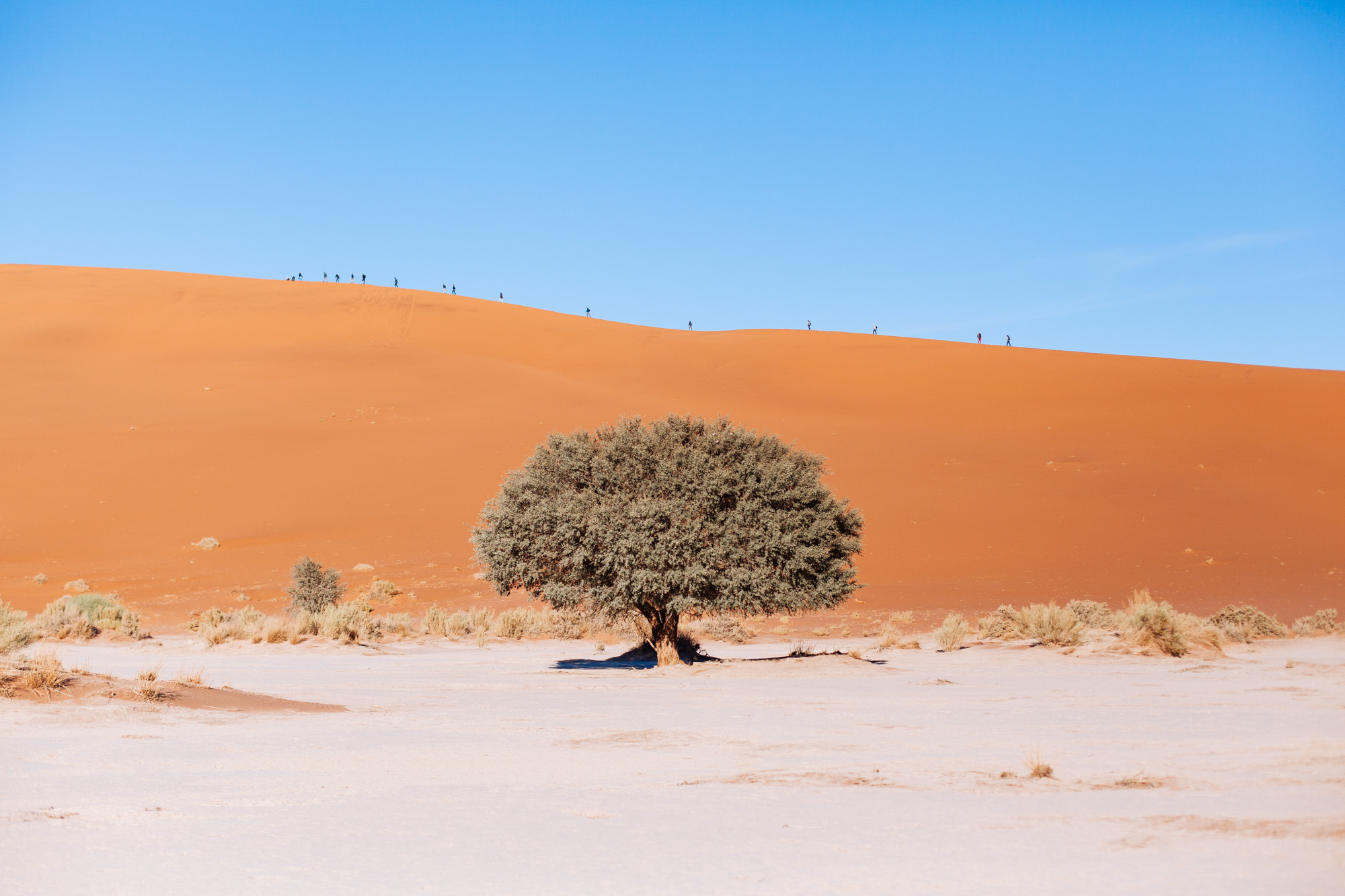 The famous orange dunes of Sossusvlei with an army of tourists making their way up to the top of Big Daddy dune.