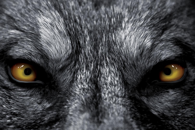 Wolf_Hero.jpg