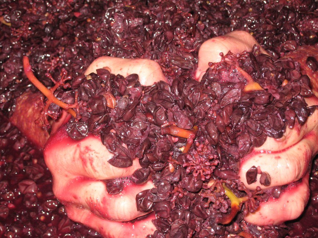 This winemaker (Marcell Deiss) has chosen to include whole grape clusters with stems, in his fermentation tank. In the cooler Alsace region of France wines tend to be lighter, so in order to make a robust Pinot Noir extra tannins from the stems give the wine a boost.