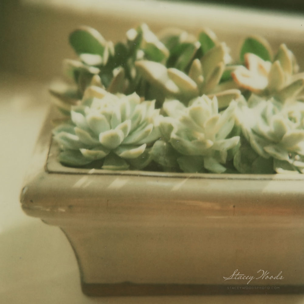 Stacey Woods Photography _ still life