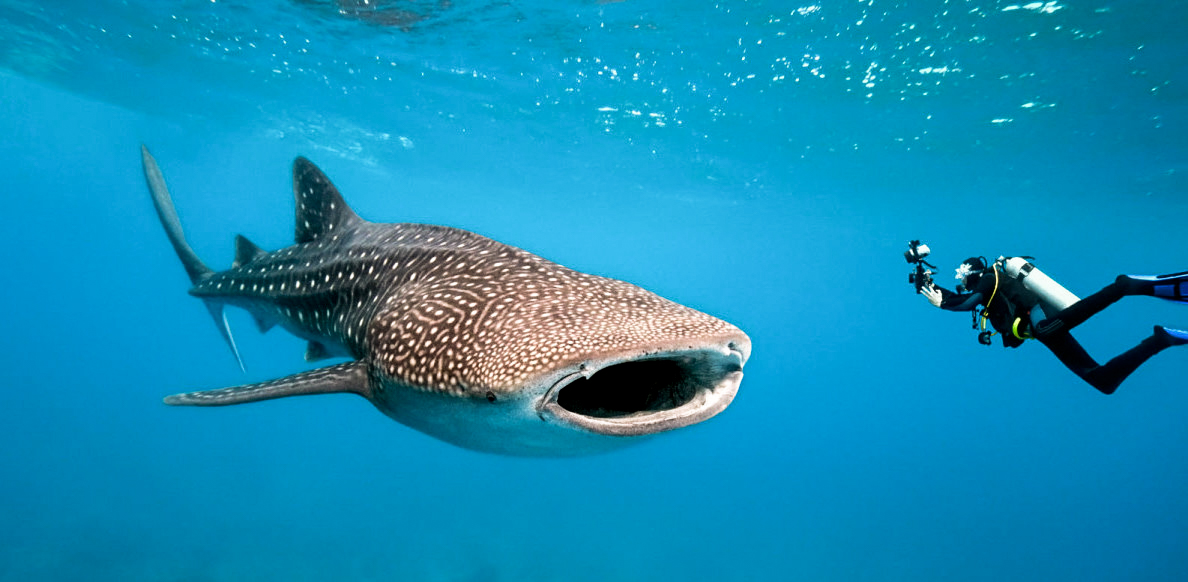 We're also swimming with whale sharks!!!!!