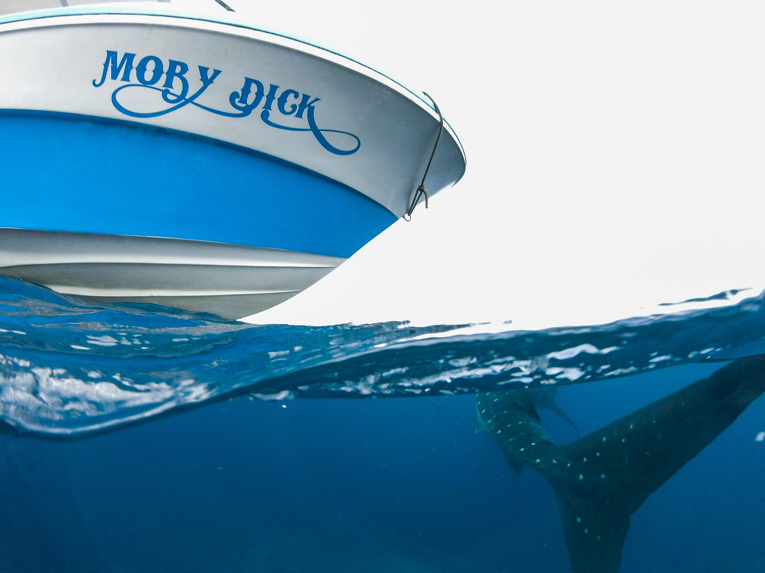 """Our boat was appropriately named, """"Moby Dick."""""""