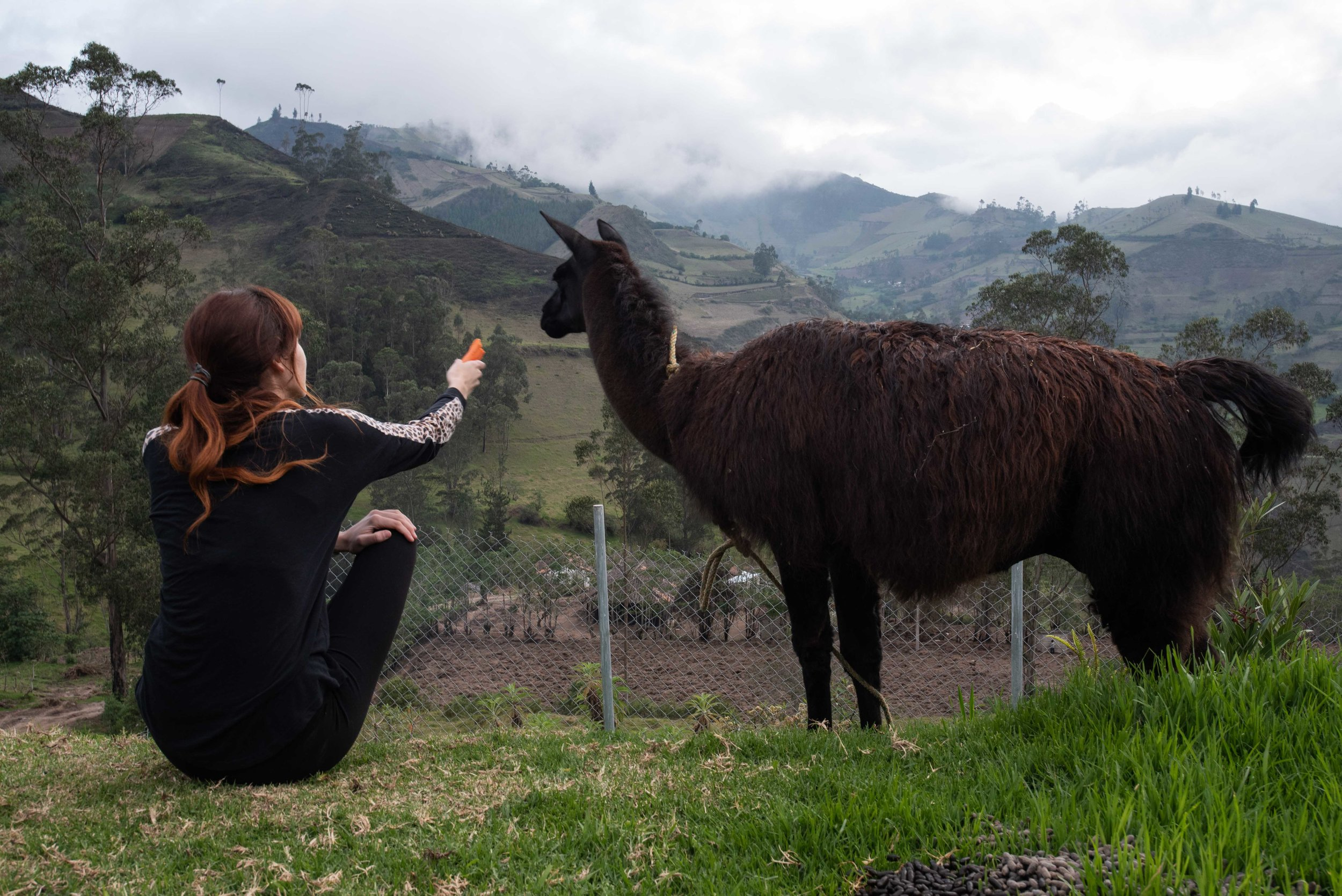 This is Tito the llama. He was a huge jerk.