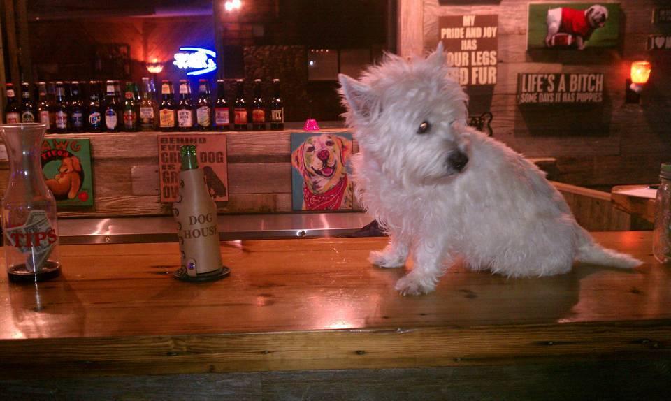 Gracie on bar.jpg